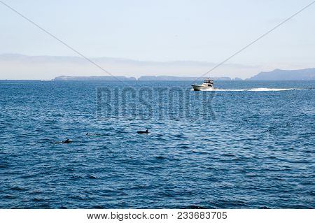 Fishing Boat And Playful Dolphins Swimming In  Ocean Waters Near Channel Islands, Southern Californi