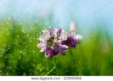 Pink Wildflower Background. Purple Wildflower On Green Field And Blue Sky Background. Colorful Wildf