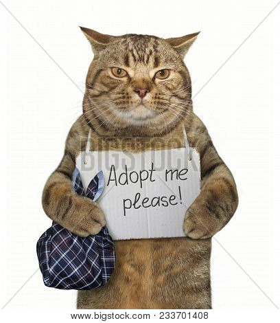 The Poor Cat With A Sign Around His Neck. It Says