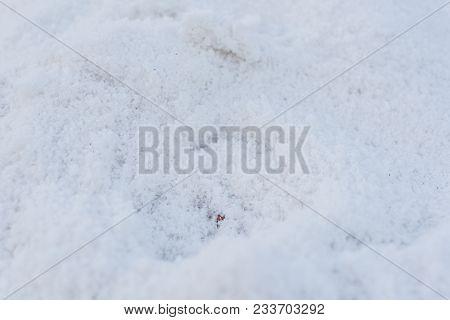 Crystal Of Natural Sea Salt - Close Up