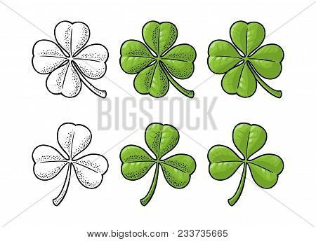 Good Luck Four And Three Leaf Clover. Vintage Color And Black Vector Engraving Illustration Isolated
