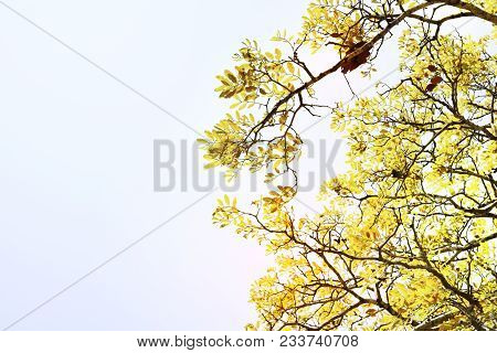 Soft Focus, Beautiful Yellow Tree Background, Beautiful Sunshine And Bright Sunshine.