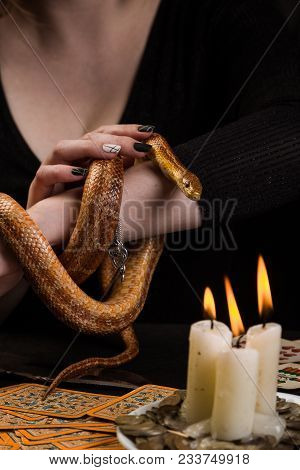 The Snake Curled In Rings On The Hand Of A Fortuneteller In Front Of A Table With Fortunetelling Car
