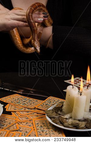 The Snake Stuck Out Her Tongue In The Hands Of The Fortuneteller Before The Cards
