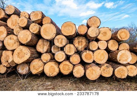 Firewood For The Winter, Stacks Of Firewood, Pile Of Firewood. Wooden Background Closeup At The Wood