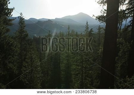 Hazy Forest In Yosemite National Park With Warm Light Contra The Photographer.