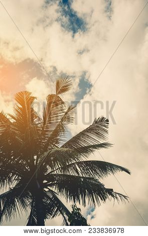 Silhouette Shot Of Coconut Tree And Sky .