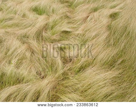 White And Green Grass With Flower In Nature For Background.