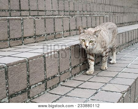 Grey Cat Walking On Stone Stair In Natural Park.