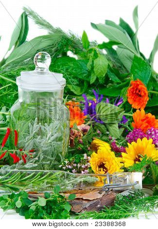Herbs For Medicine Or Cooking Fresh From The Garden