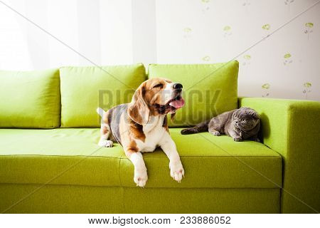 The Cat And The Dog Are Lying On The Sofa
