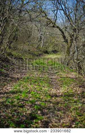 Road In A Spring Time Forest
