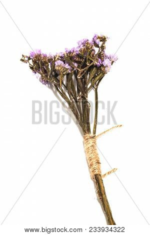 Single Of Purple Statice Flower Background Use For Decoration On White Background