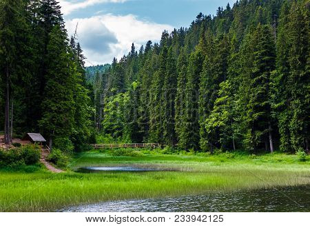 Beautiful Spruce Forest Around The Lake. Lovely Nature Scenery Of Synevyr National Park With Wooden