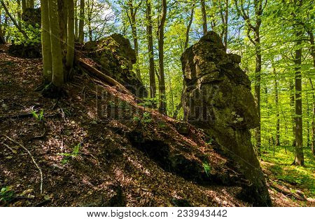 Rocky Formation Among The Green Forest. Mysterious Place Looks Like Stone Idol. Lovely Place In Wild