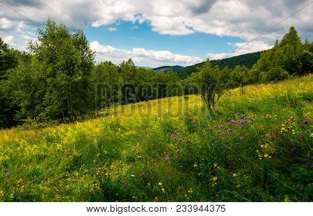 Meadow With Wild Herbs Among The Forest In Summer. Beautiful Nature Scenery In Mountains On A Cloudy