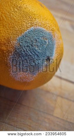 Mold Damage In Orange Fruit That Changed Color Into Green And White