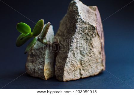 Rock Splited In Two Parts With The Small Succulent Plants. Concept Of The Goal Achievement, Business