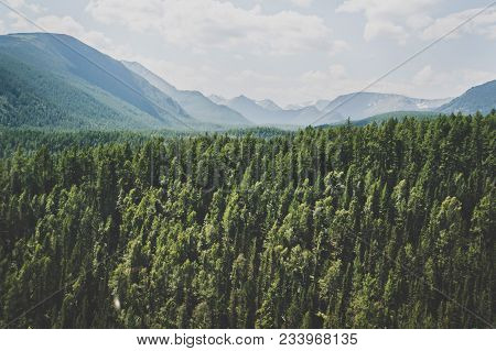 Landscape With Forest Mountains. Altai, Siberia. High Fir On The Slopes Of The Altai Mountains. The