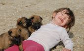 laughing little girl and young puppies purebred belgian shepherds poster