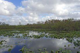 Anhinga Trail Through The Everglades National Park, Florida, Usa.