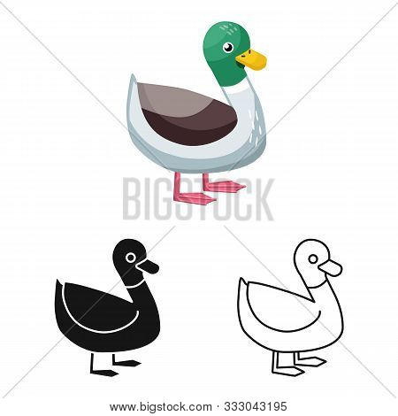 Isolated Object Of Duck And Bird Icon. Set Of Duck And Drake Vector Icon For Stock.