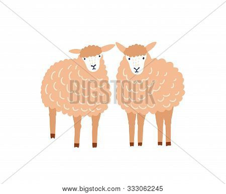 Two Cute Sheep Flat Vector Illustration. Adorable Woolly Lambs, Fluffy Domestic Animals Isolated On