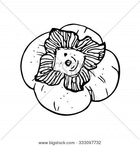 Persimmon - Tropical Fruit Illustration. Ripe And Sweet Malabar Ebony Or Diospyros Malabarica Fruits