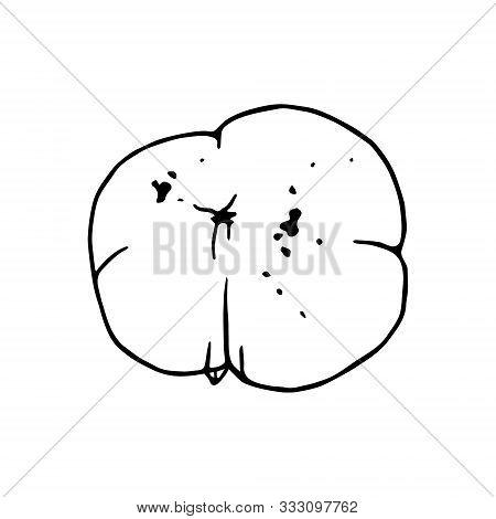 Persimon Back  Illustration. Ripe And Sweet Malabar Ebony Or Diospyros Malabarica Fruits. Hand Drawn
