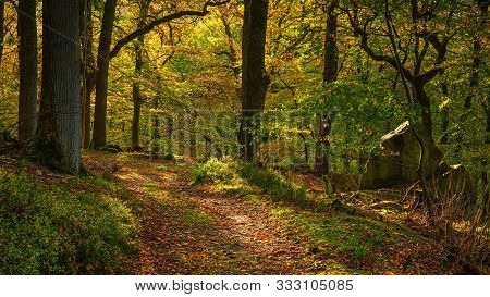Autumn Walk Through Morralee Wood, At Allen Banks And Staward Gorge In The English County Of Northum