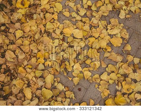Top View Of Dry Autumn Leaves In Yellow And Brown Colors On A Pavement. Fall Season Concept.
