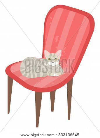 Kitten Relaxing On Soft Pink Armchair Vector, Isolated Kitty On Chair Grey Purring Pet In Home. Stoo