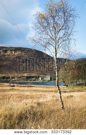 A Solitary Tree In A Meadow With The Ruins Of Kilchurn Castle  In The Background On The Edge Of Loch