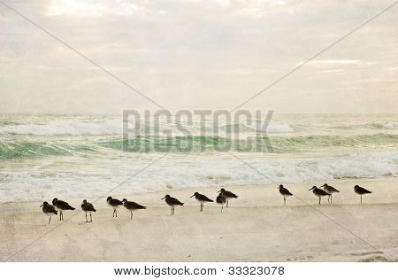 Textured Painterly Beach Scene at Sunset with Birds