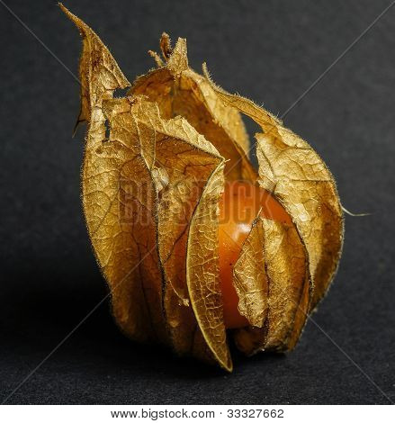Physalis, or Cape Gooseberry