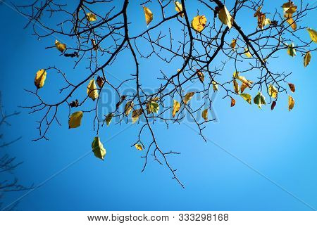 Cold Sky And Branches With Remaining Autumn Leaves