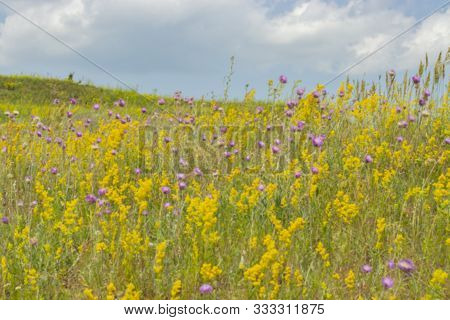 Blurred Background, Summer Meadow Landscape Blooming With Wild Flowers, Yellow Lilac Green. Bright B