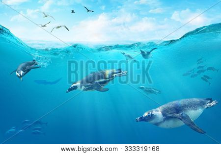 A flock of African penguins diving among fish. Ocean underwater with marine animals. Sun rays passing through the water surface.