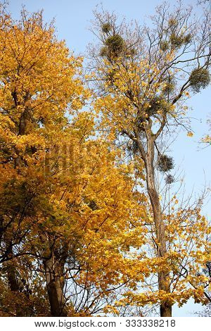 Yellowed foliage on autumn trees on a sunny clear day. Change of seasons. Calm time to summarize efforts and harvest. Solemn mood. Wilting nature. An abundance of warm colors. Fiery colors. poster