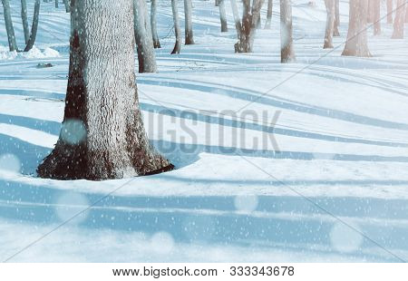 Winter landscape, snowy winter trees and snowdrifts in the forest. Winter snowy morning scene with falling winter snowflakes. Colorful winter background