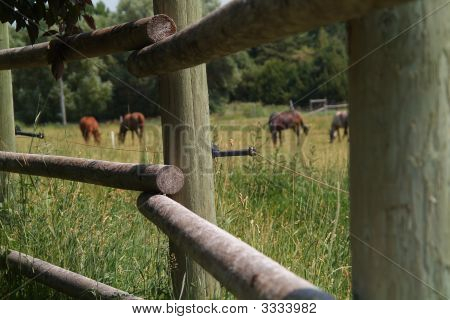 horses behind electric fence attached to poles poster
