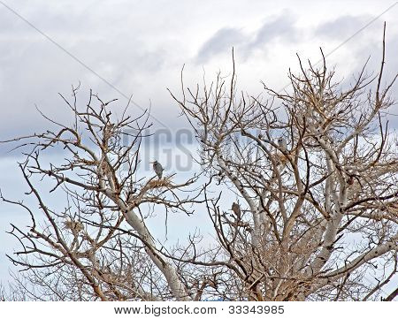 Tree of Great Blue Heron Birds