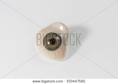 Glass Eye Prosthetic Or Ocular Prosthesis With Shadow On White