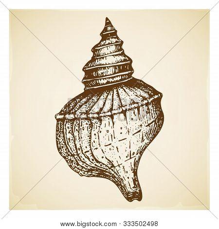 Vintage Hand Drawn Seashell Illustration Isolated. Beautiful Engraved Rapana Mollusk Marine Shell. R