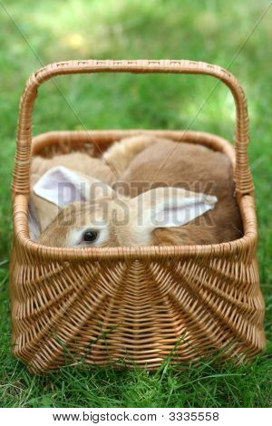 basket with two rabbits on the grass poster
