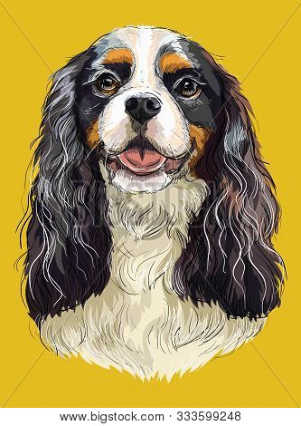 Realistic Portrait Of Dog Cavalier King Charles Spaniel. Colorful Vector Hand Drawing Illustration I