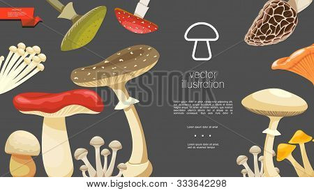 Flat Forest Mushrooms Colorful Template With Morel Chanterelle Russula Enokitake Toadstools Honey An