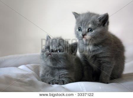 The Children'S World Of Kittens