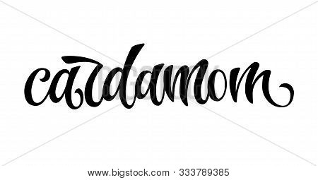 Hand Drawn Spice Label - Cardamom. Vector Lettering Design Element. Isolated Calligraphy Script Styl