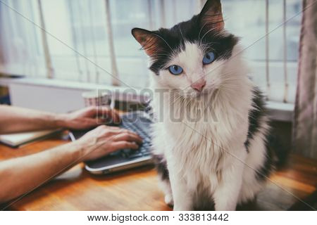 Man working at the desk with his cat. Concept of allowing pets in workplaces.
